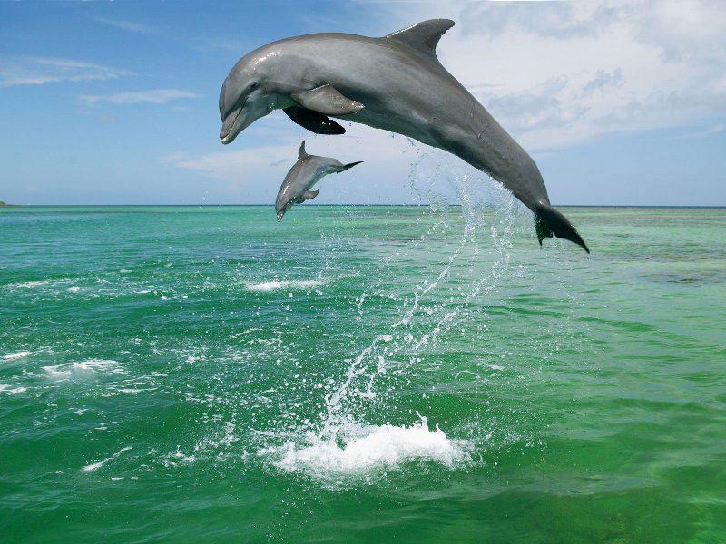 Мать и дитя в мире животных: дельфины. Фото