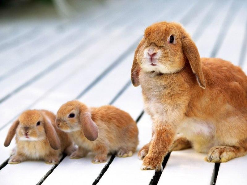 Мать и дитя в мире животных: крольчиха с крольчатами. Фото