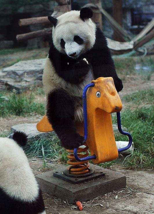 Детская площадка для малышей панды (фото и видео репортаж)